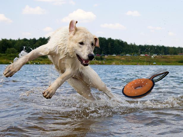 CI-Premier-Pogo-Splish-Splash_Dog-With-Water-Toy_s4x3_lg